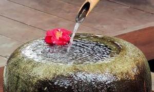 flower-shower-403138-m